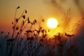 7551740-sunrise-behind-tall-grasses[1]